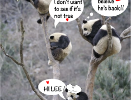 Pandas, China and me.